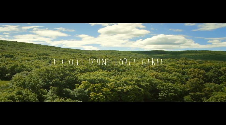 FORÊT : La gestion de l'ONF en vidéo